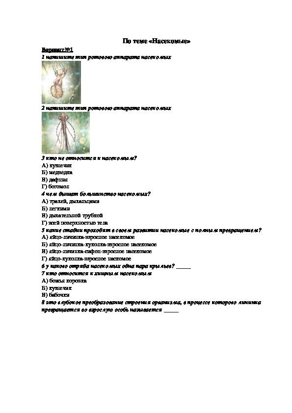 "Тест по биологии на тему ""насекомые"" (7 класс, биология)"