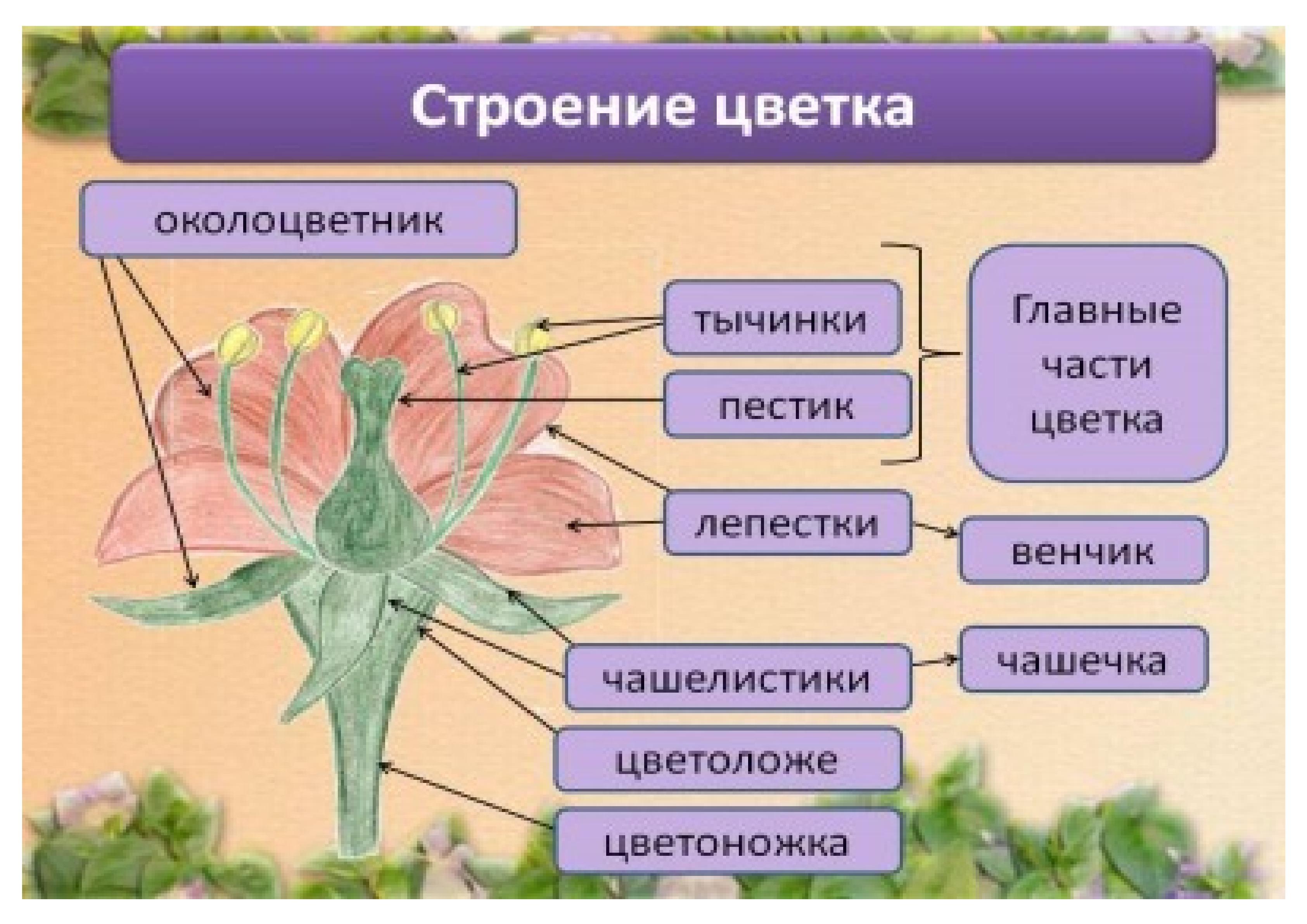 """Плакаты по теме """"Строение цветка"""""""