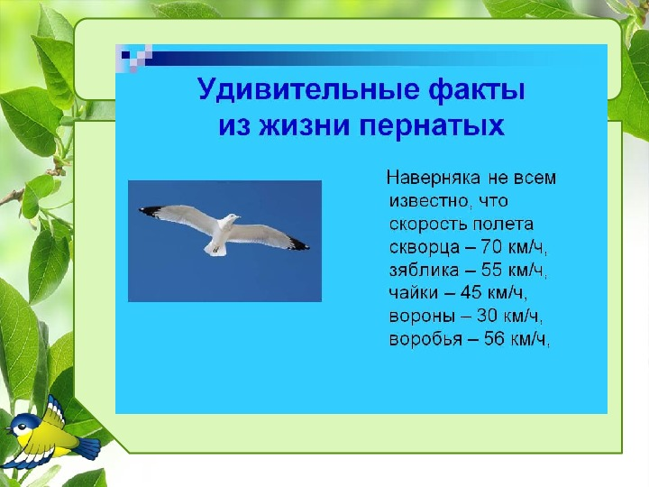 """Презентация к мероприятию """"Птичий переполох"""""""