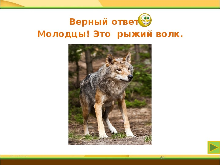 """Эрудицион  """"Мой товарищ  тамбовский волк"""""""