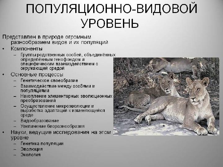 """Презентация по биологии на тему """"Популяционно - видовой уровень жизни"""" (10 класс)"""