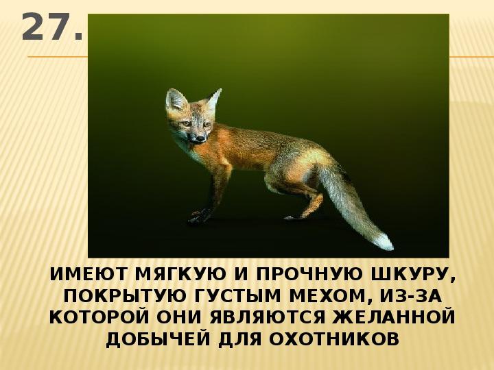 Интеллектуальная игра по зоологии 7 класс АЛФАВИТ