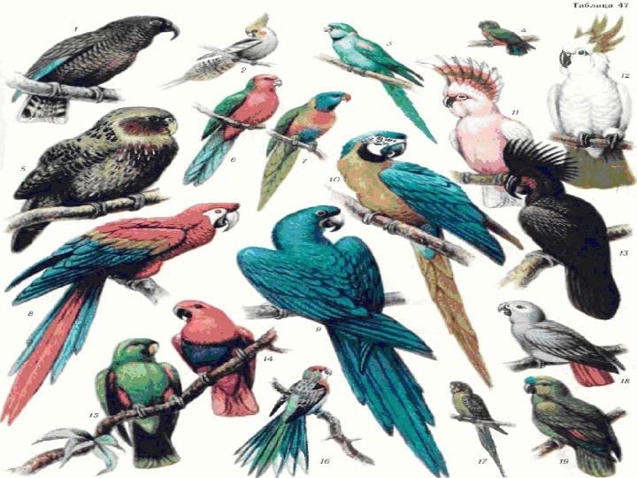 """Интегрированный урок математика+окружающий мир """"Табличное умножение и деление. Разнообразие животных."""""""