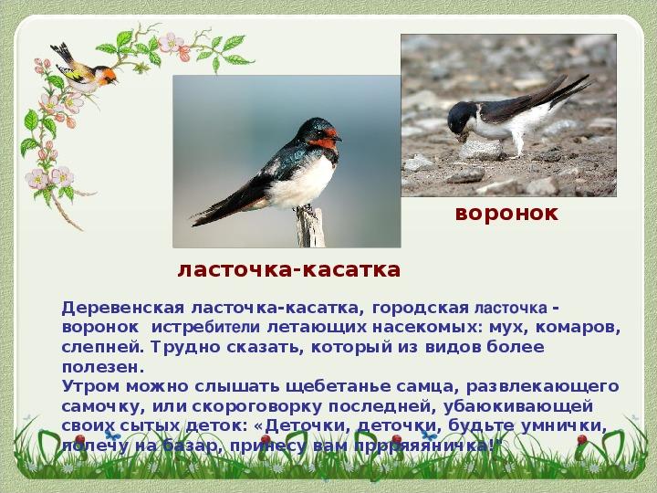 """Презентация по биологии """" Птицы Ростовской области"""""""