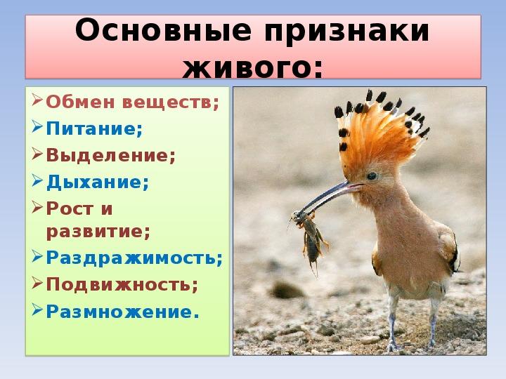 """Презентация по биологии на тему """"Чем живое отличается от неживого?"""" (6 класс)"""
