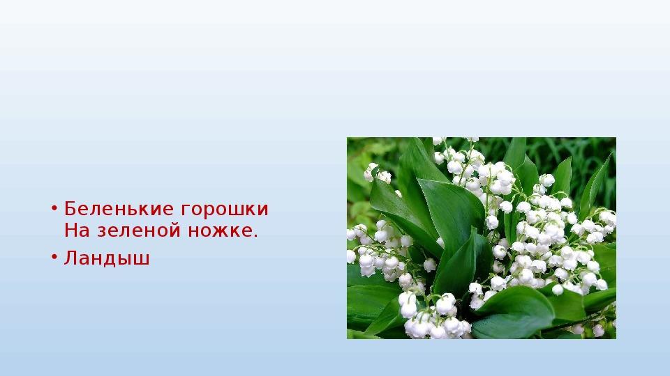 """Презентация на тему: """"Полевые цветы"""""""