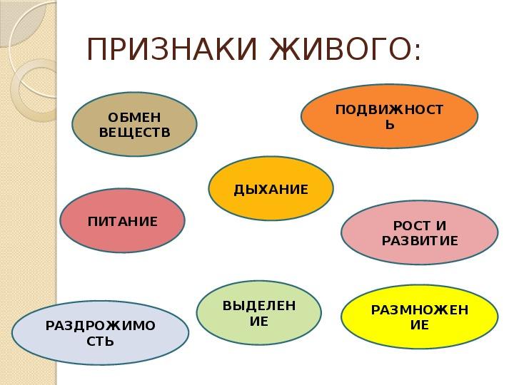 """Презентация """"Живое и неживое"""" 5 класс"""
