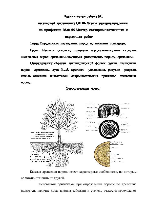 Указания  к  выполнению  практической  работы  на  тему: Определение  лиственных  пород  по  внешним  признакам (1 курс).