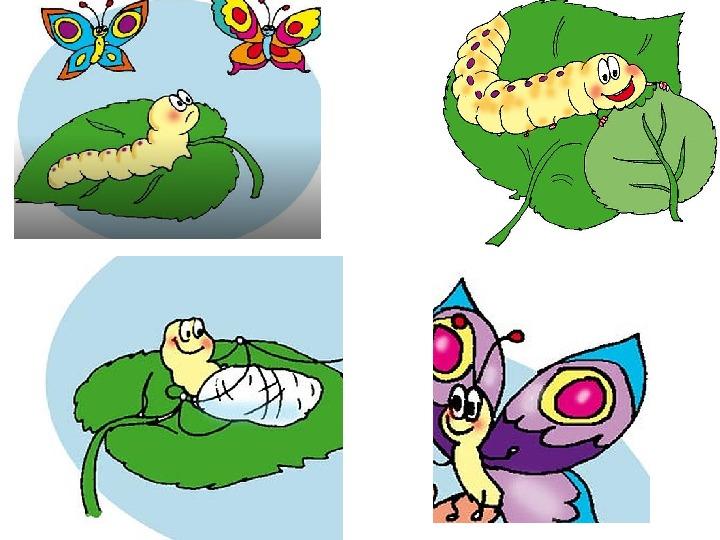 """Презентация к уроку """"История о маленьких гусеницах"""""""
