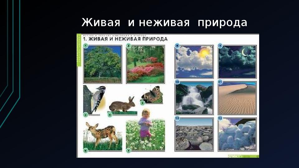 """Презентация по окружающему миру на тему: """"Невидимые связи"""" (2 класс, окружающий мир)"""