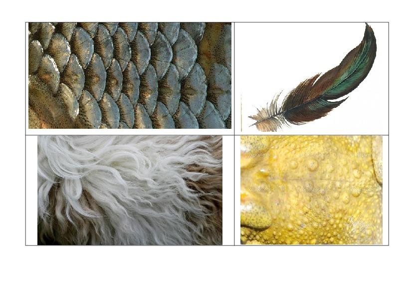Тема урока: «Какие бывают животные» 2 класс, окружающий мир