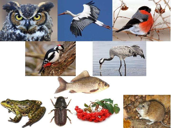 Роль птиц в природе и их значение для человека. Птицеводство.