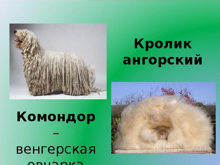 """Конспект  и презентация  к уроку  развития речи в 5 классе """"Описание животного"""""""