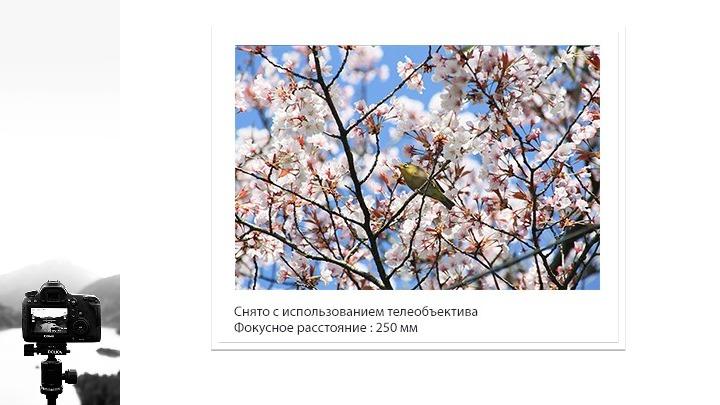 Основы фотографии.Презентации.