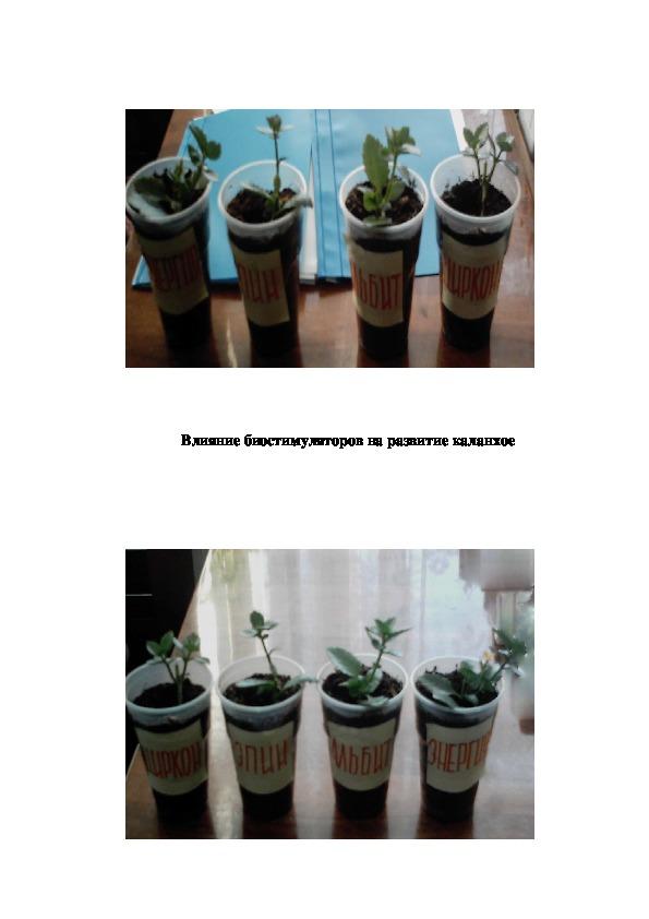Исследовательская работа «Ростовые вещества, их влияние  на рост и развитие растений»