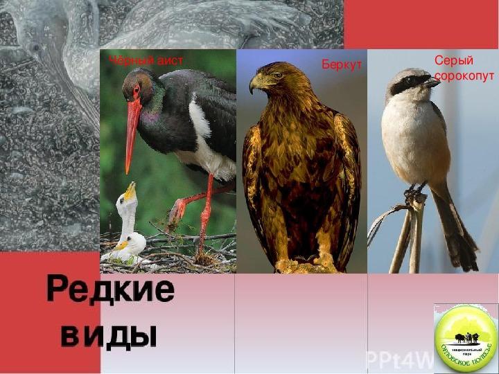 Презентация к уроку по биологии « Орловское Полесье-край чудес!»