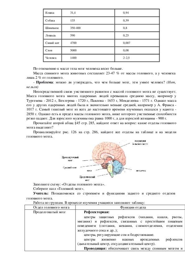 Урок по биологии на тему «Строение головного мозга. Продолговатый мозг, мост, мозжечок, средний мозг»