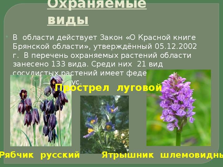 картинки с растениями брянской области создаем видеоистории фотоархивы