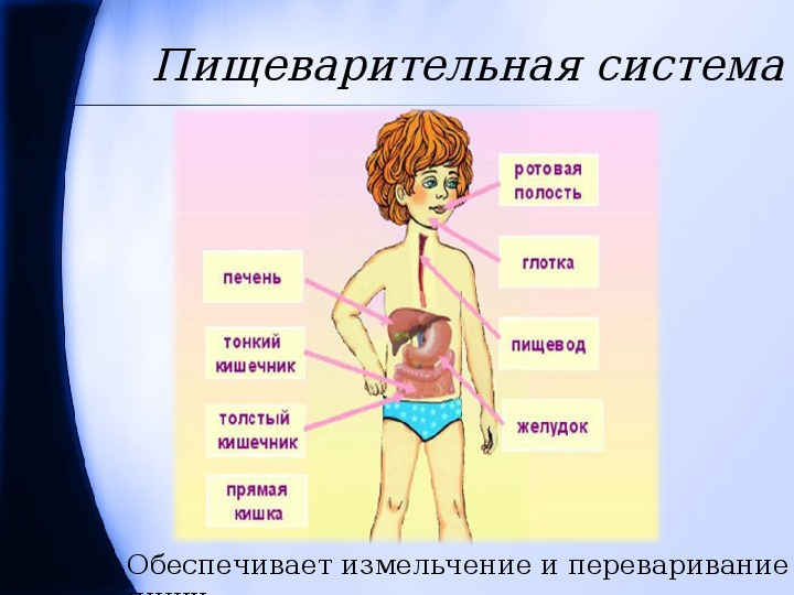 """Конспект и презентация к уроку окружающего мира на тему """"Строение тела человек"""" (3класс)"""