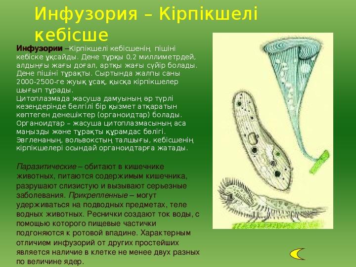 """Презентация по биологии на тему: """"Одноклеточные животные"""" (7 класс)"""