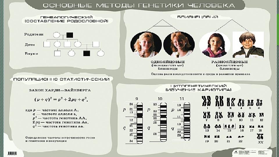 Презентация на тему: «Генетика. Основные понятия».  9 класс.