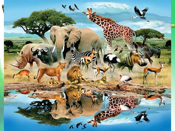 """Презентация по биологии """"Что такое биоразнообразие"""" (5 класс)"""