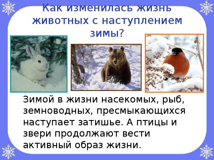 """Открытый урок по окружающему миру  на тему: """"В гости к зиме"""" (2 класс)"""