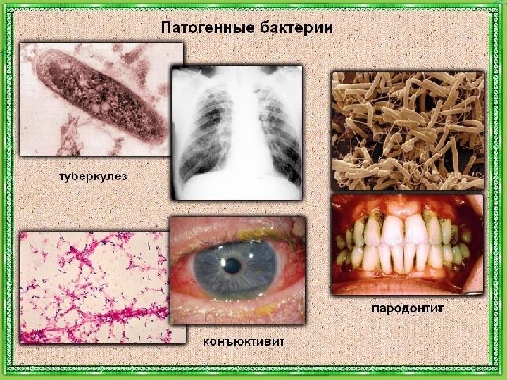 """Презентация по окружающему миру: """"Царства природы. Бактерии"""" (2 класс)"""