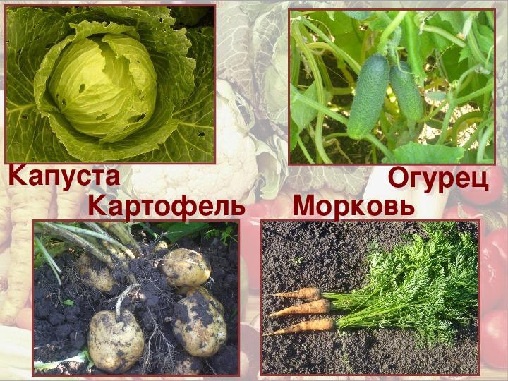 """Урок по ФП """"Овощи"""" (1-2 класс, ОЗМ)"""
