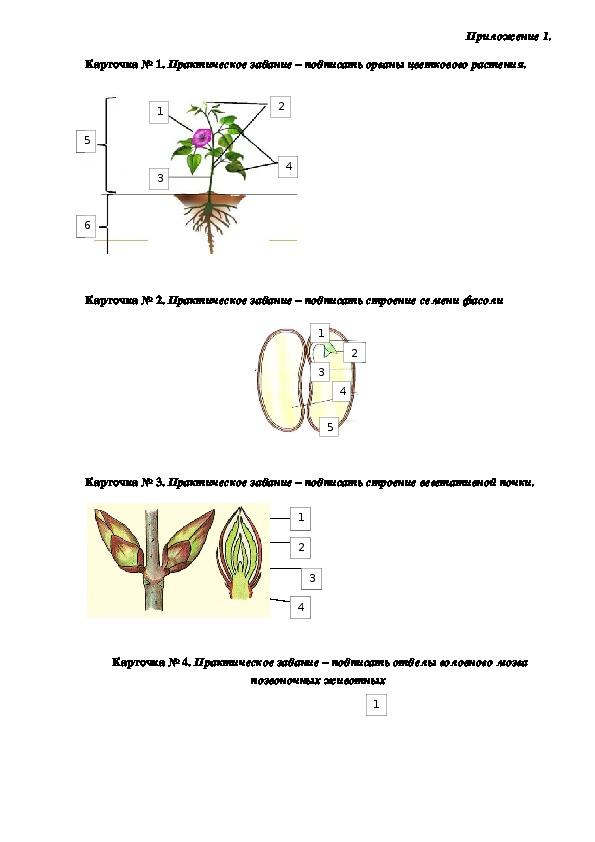Дидактические карточки по биологии 6 класс