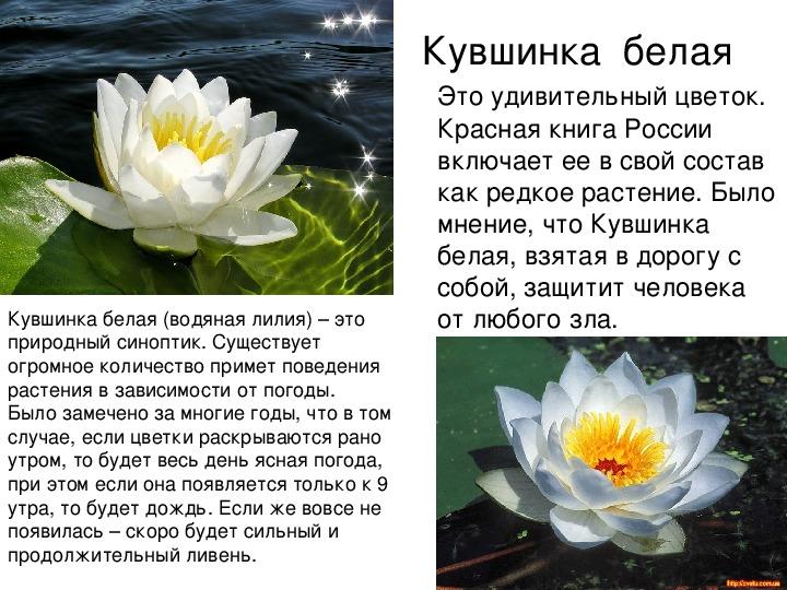 Страница красной книги россии с кувшинкой белой настоящее время