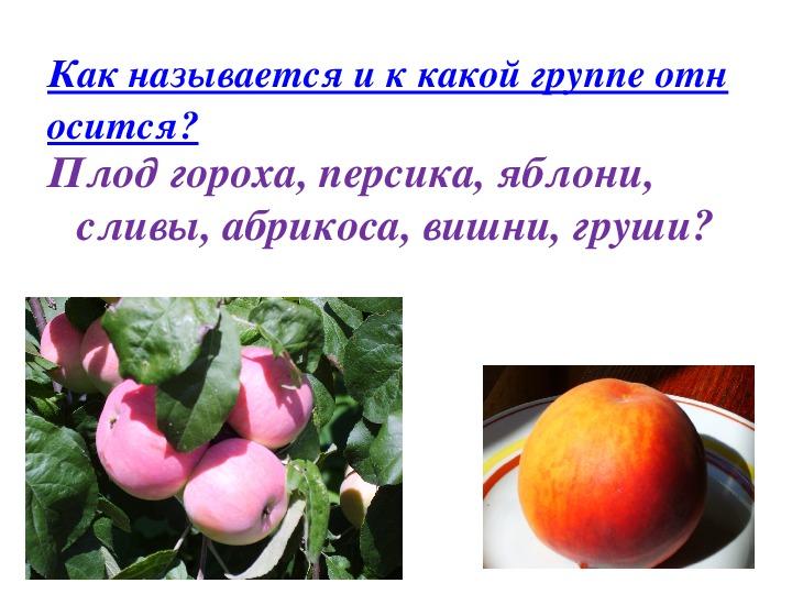 """Презентация к обобщающему уроку по теме """" Цветок и плод"""" 6 класс"""