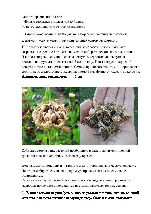 Конспект урока в 6 классе по предмету цветоводства и декоративного садоводства