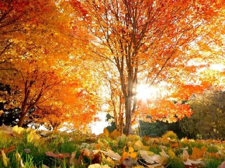 Музыкально-логопедическое развлечение «Осенний Теремок» для дошкольников
