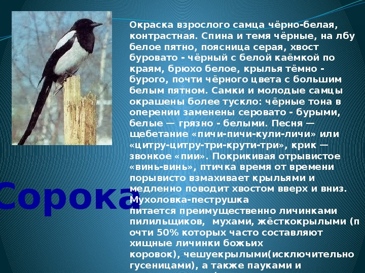 """Презентация """" Международный день птиц"""""""
