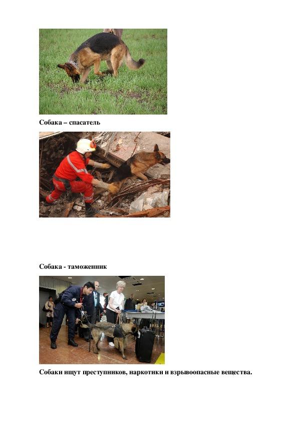 Проектная работа «Роль собаки  в жизни человека»