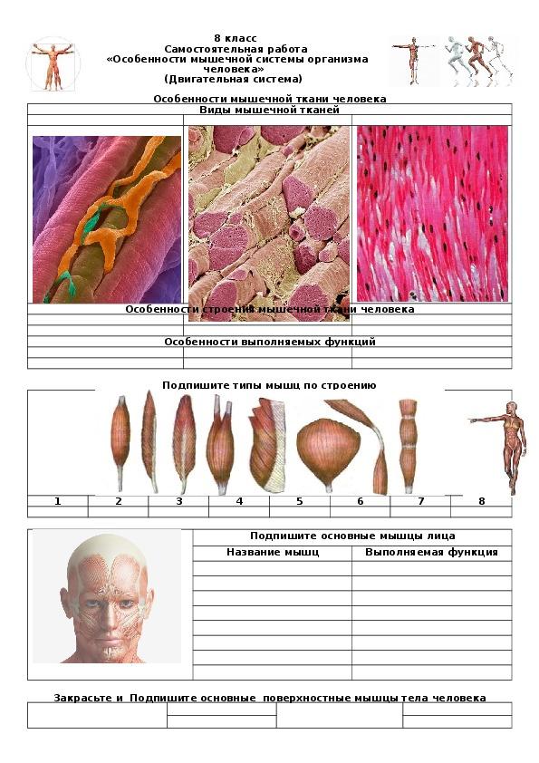 Самостоятельная работа по теме  «Особенности мышечной системы организма человека» (Двигательная система).  8 класс.