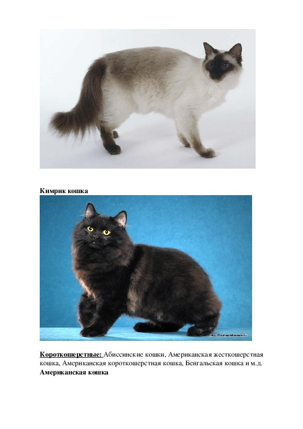 Научно - исследовательский проект «Мой домашний питомец – кошка Лиза»