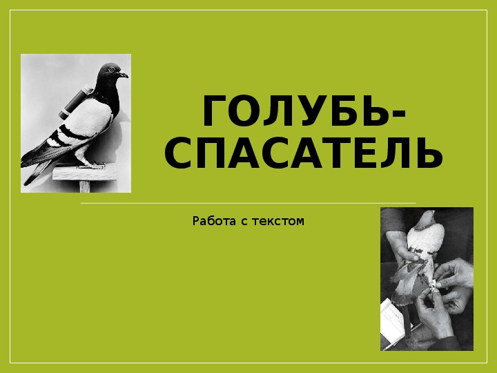 """Презентация по русскому языку на тему """"Работа с текстом. Голубь-спасатель"""" 2-4 класс"""