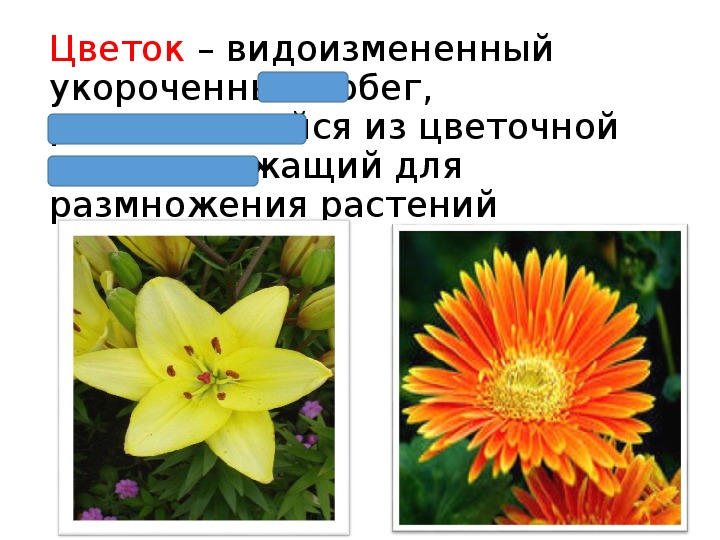 """Презентация по теме """"Цветок"""" (биология, 6 класс)"""