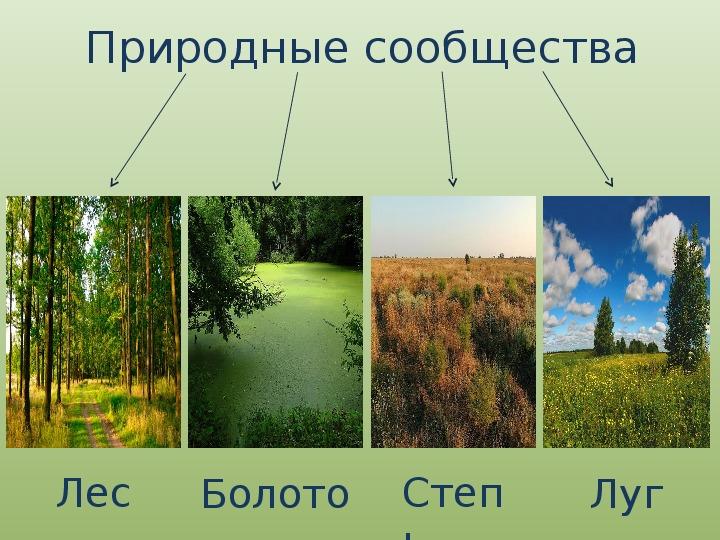 """Презентация по биологии на тему """"Естественные природные сообщества"""""""