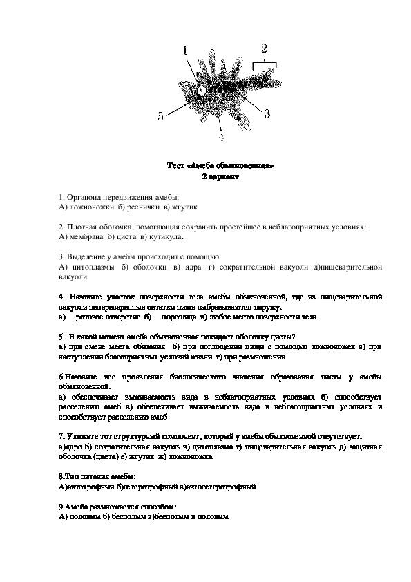 "Тест ""Амеба обыкновенная"""