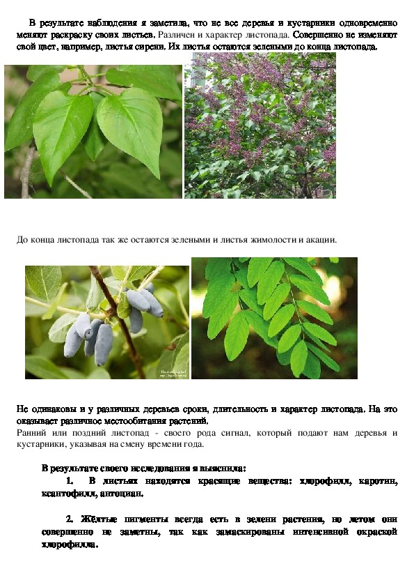 """Исследовательская работа  """"Почему осенью листья на деревьях разного цвета"""""""