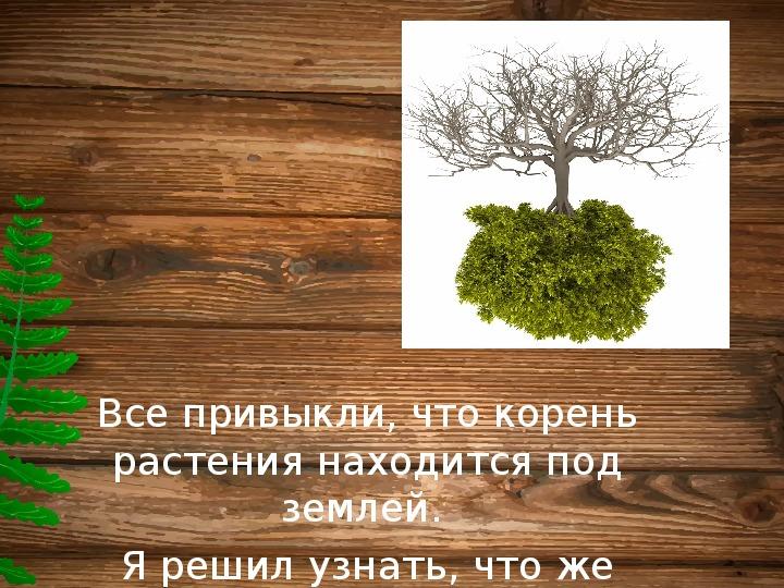 Исследовательская работа на тему: Почему корни растут вниз, а листья – вверх