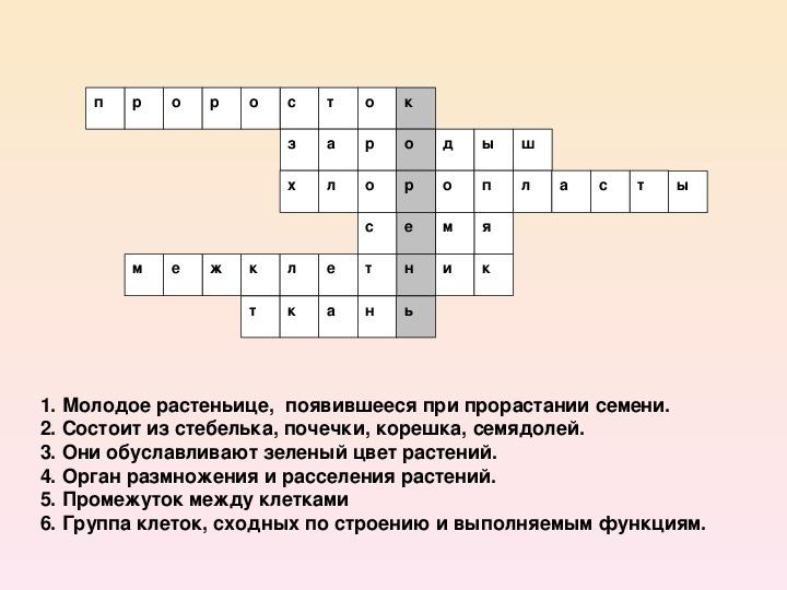 """Презентация по теме """"Корень"""" (биология, 6 класс)"""