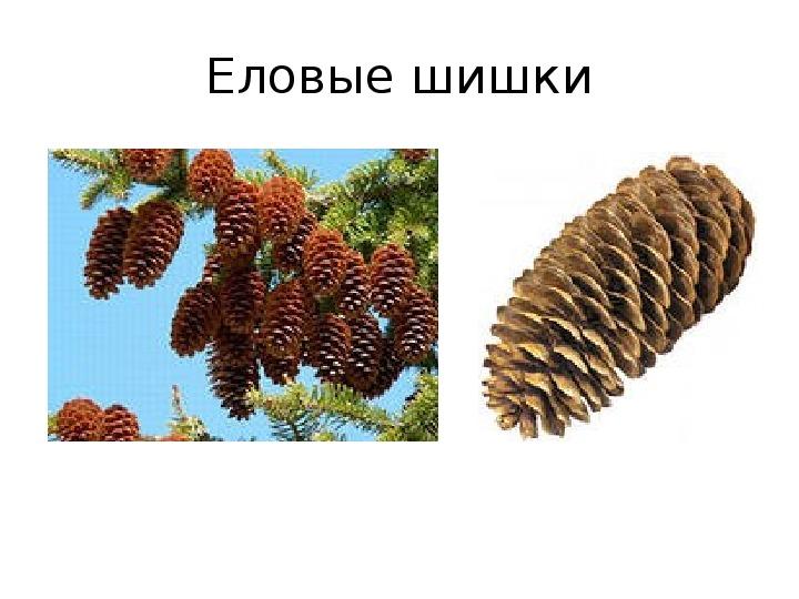 «Наши друзья – деревья»