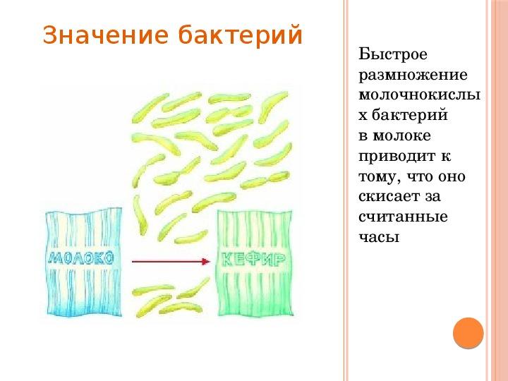 """Урок """"Бактерии"""" 5 класс биология"""