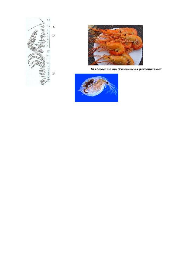 """Тест по биологии на тему """"Класс  Ракообразные"""" (7 класс, биология)"""