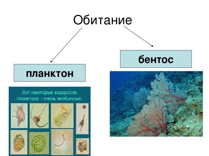 "Презентация ""Водоросли"" 6 класс"