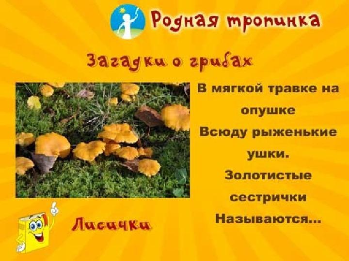 грибы загадки с картинками и ответами казахстанские